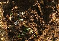生ゴミ土と混ぜ冬