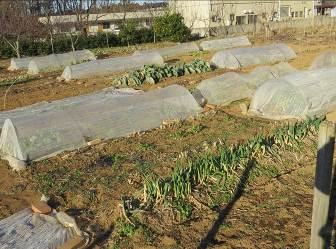 菜園2月、防虫ネットなど