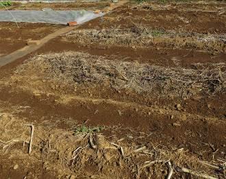 菜園の収穫物残骸2月1