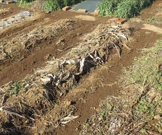 菜園収穫物残骸2月2