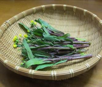 コウタイサイ収穫物2月