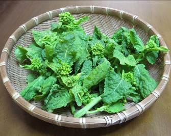 早生ツボミ菜収穫物2月