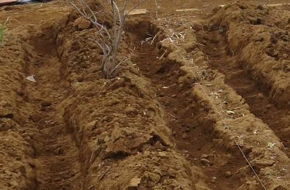 深層施肥のための溝掘り