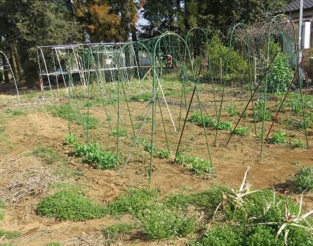 我が家の無耕起菜園3月下旬