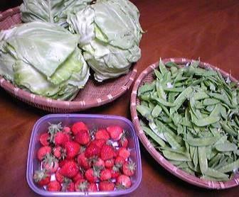 キャベツ、イチゴ、キヌサヤ