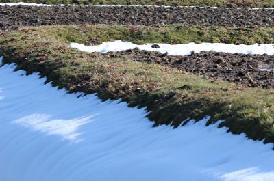 北広島 春の雪3