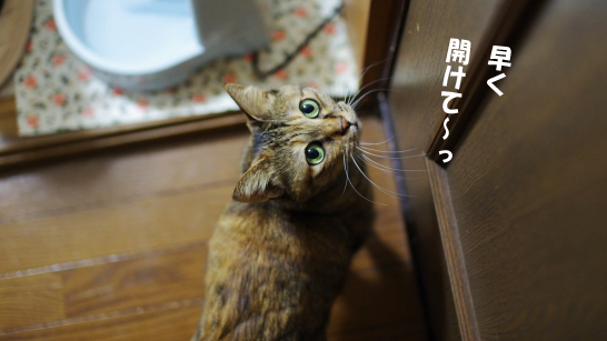 また猫部屋しぇsdsのコピー