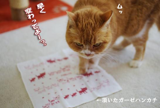 5ぷぷがいららsdsdsコピー