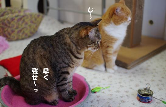 二人待ってr8^¥s-d^あdsコピー