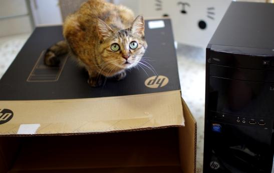 新しいパソコンおいいdさdさだdさ