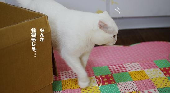 猫部屋短間ーーsd-あsだコピー