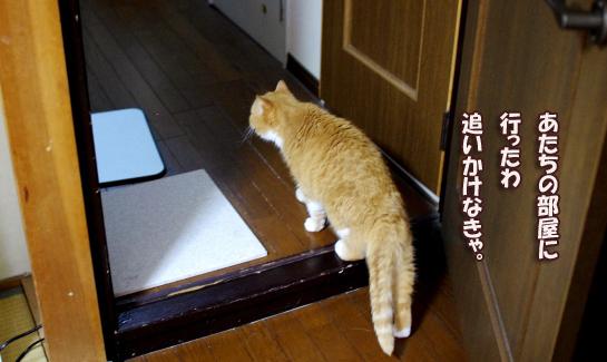 猫部屋にいったわ0-あsだsだだのコピー