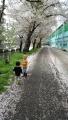 葉桜も見え始めてきました。