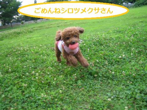 IMG_7795_convert_20150622003534.jpg