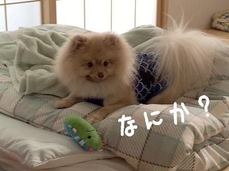 IMG_1603[1]