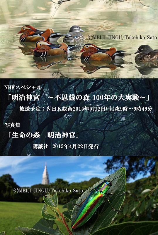 明治神宮 NHK 写真集