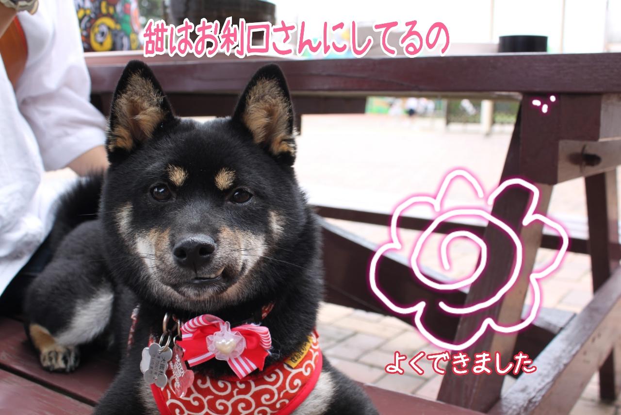 20150704-お利口甜ちゃん