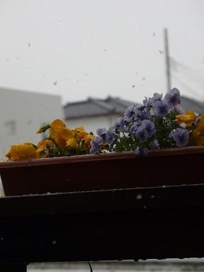 0408-01.jpg