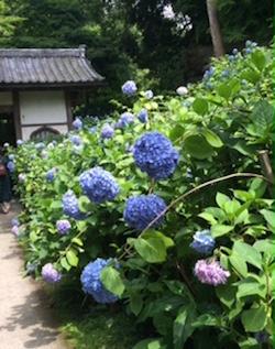 2015,6,11鎌倉2