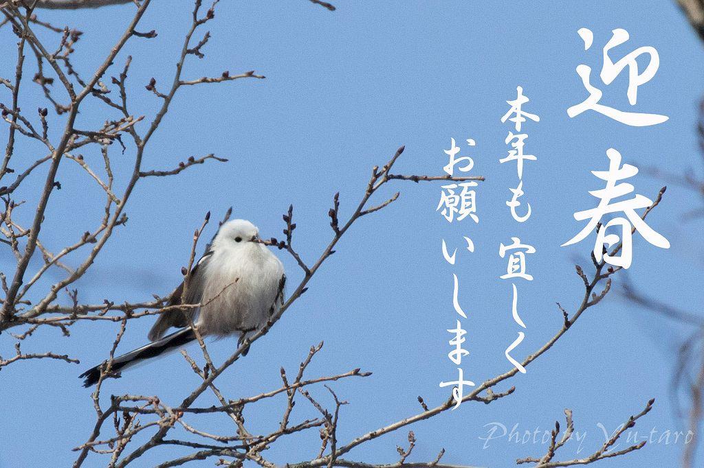 迎春2015_01