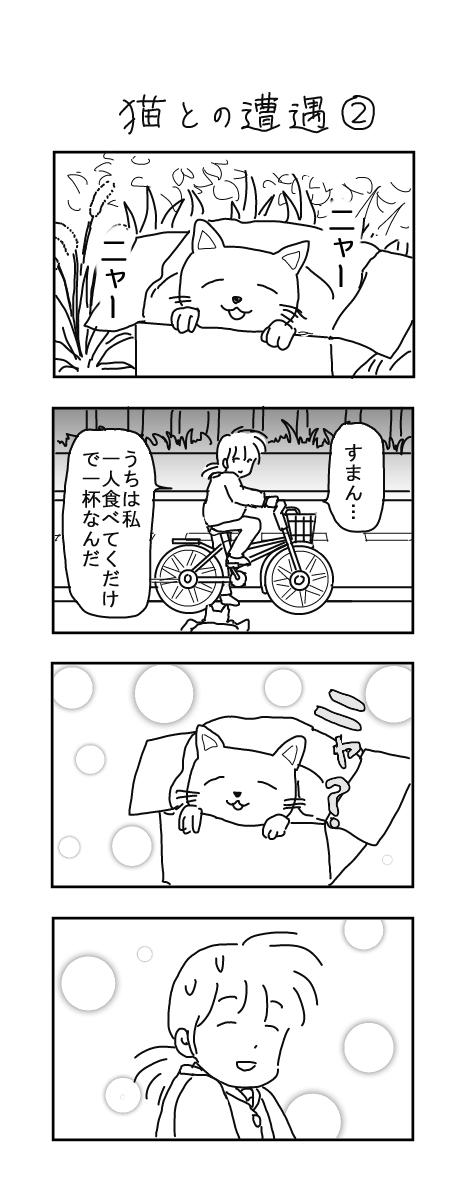 猫との遭遇2
