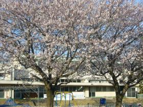 1503-1桜