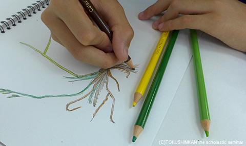 探Q教室1505植物スケッチa