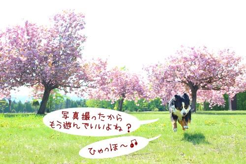 7G6A0636-zz.jpg