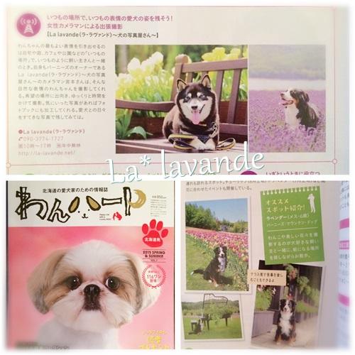 cats_20150421204523c6b.jpg