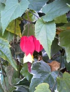 20157vickys flower