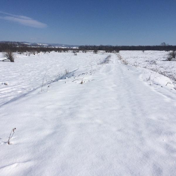 2月11日雪原