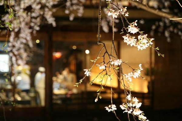 宵桜201420036