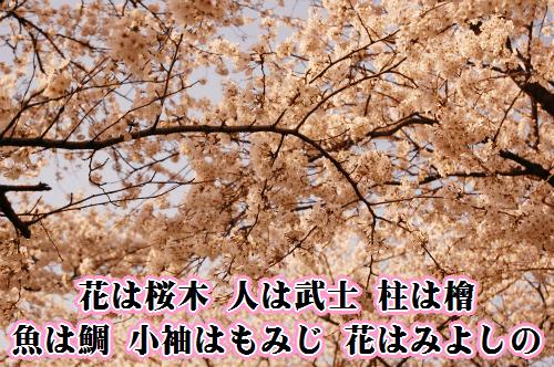 sakuragi.png