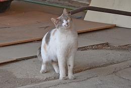 2015601ネコ1