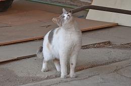2015601ネコ2