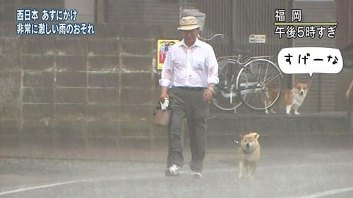 雨の日のお散歩