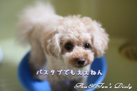 004IMG_1718_20150316182248d9d.jpg