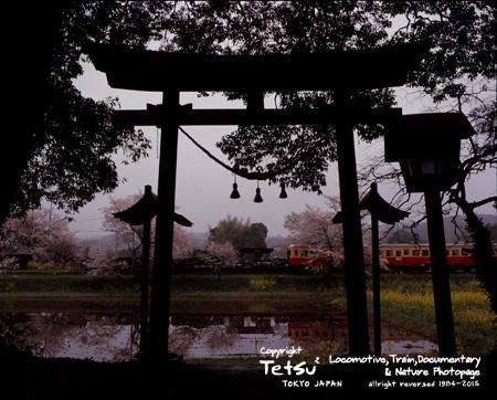 2015047飯給・神社crt
