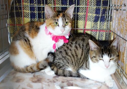 DSC04233 - 2猫