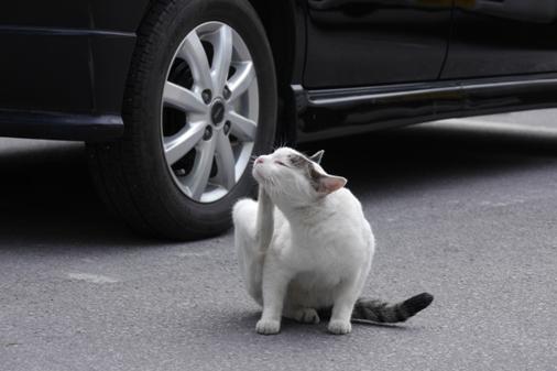 P1010242 - 駐車場猫