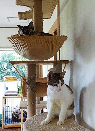 DSC02964 - 猫タワー