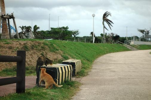 DSC04253 - 猫島