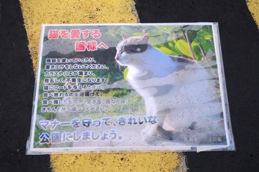 DSC04255 - 猫島