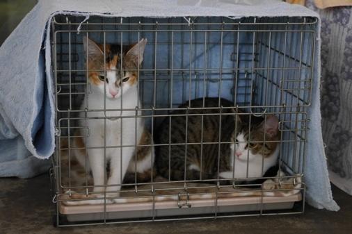 P1010563 - 2猫