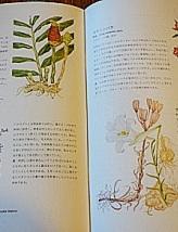 DSC04583 - 命草本