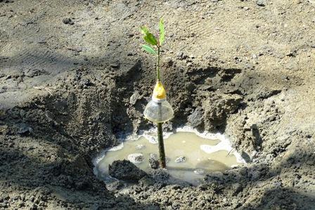 植樹完了 DSC03963
