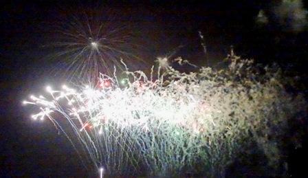 白い花 DSC04138