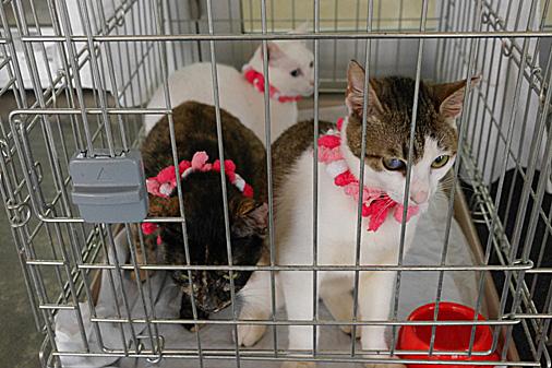 P1010711 - 3猫