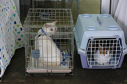 P1010765 - 白猫