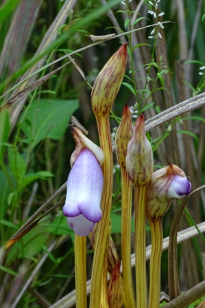 紫の花-b DSC05054